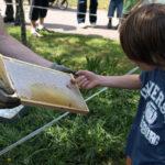 Honigverkostung direkt aus der Wabe