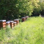 Bienenstand in Hohenheim