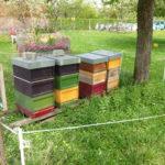 Bienenstand Wilhelma